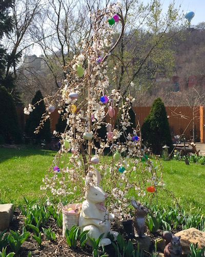 small flowering tree with plastic Easter eggs, Pittsburgh, PA