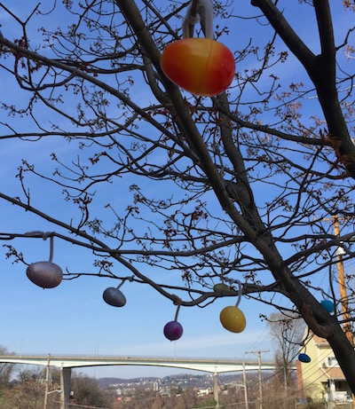 plastic Easter eggs hanging from tree, Pittsburgh, PA