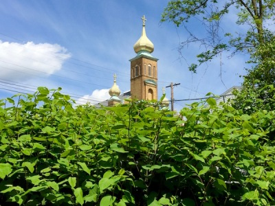 St. Michael's Orthodox church, Rankin, PA from over a bank of weeds