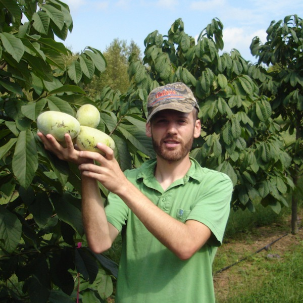 Author Andrew Moore holding three huge pawpaw fruits in a pawpaw orchard
