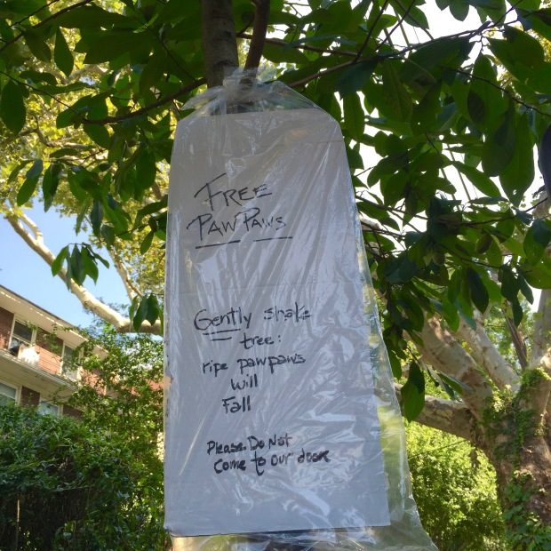 pawpaw tree with sign for free use