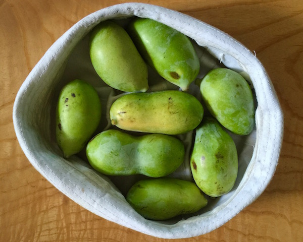 eight smaller pawpaw fruits in a white hat on wooden table
