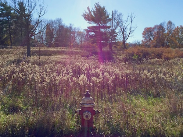 fire hydrant in field of tall weeds, Pittsburgh, PA