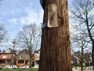 Clarence the Bird original artwork stapled to telephone pole, Pittsburgh, PA