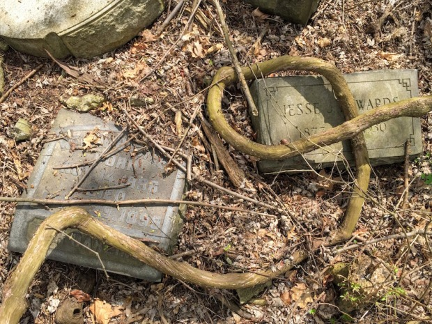 gravestones removed from their graves and under thick vine, Pittsburgh, PA