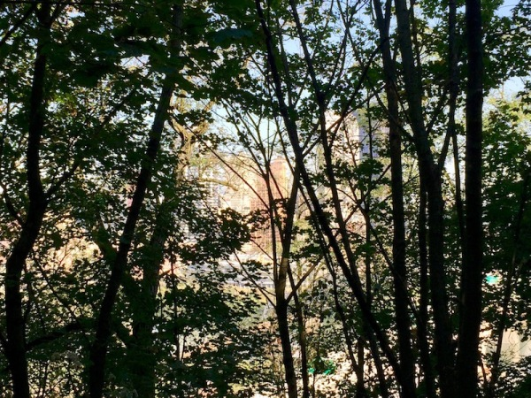 downtown Pittsburgh seen through silhouetted trees