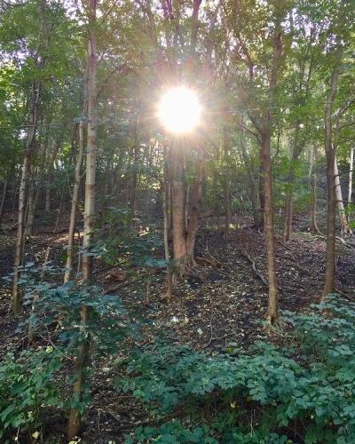 sun coming through trees in Grandview Park, Pittsburgh, PA