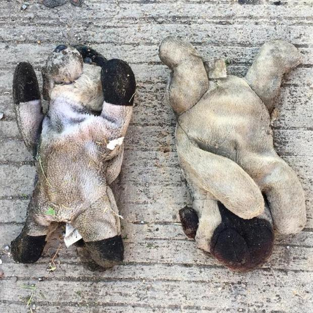 two stuffed animal dogs laying on cement street, Pittsburgh, PA
