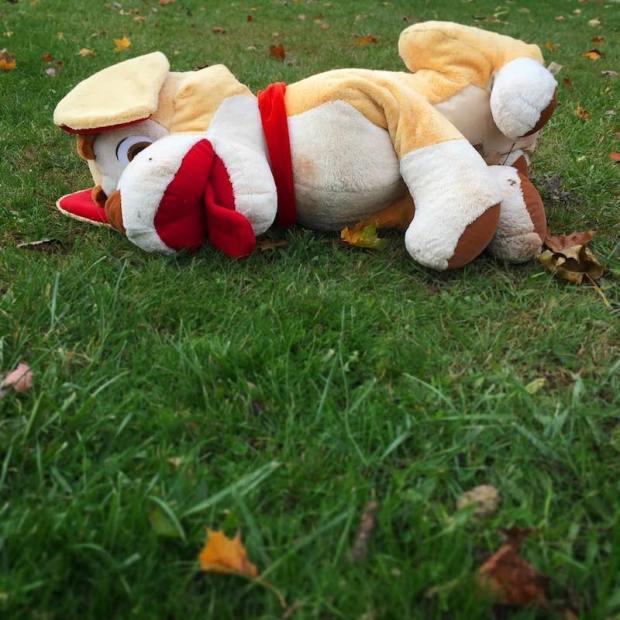 stuffed animal dog laying in grass, Pittsburgh, PA
