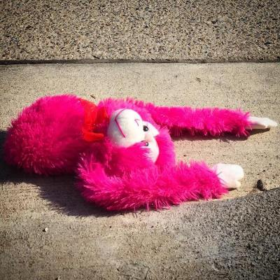 pink stuffed animal monkey on street pavement, Pittsburgh, PA