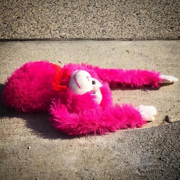 pink stuffed animal monkey on street pavement, Pittsburgh, PA