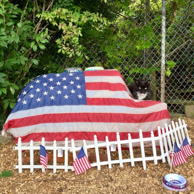 American flag draped over large object with cat and cat bowls sitting on top, Pittsburgh, PA