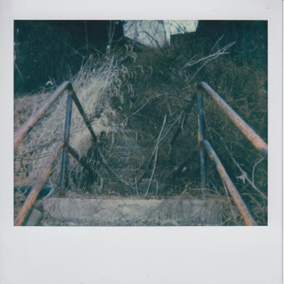 Polaroid photo of overgrown city steps in Pittsburgh, PA