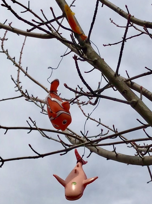 three plastic fish hanging from wire in a bare tree