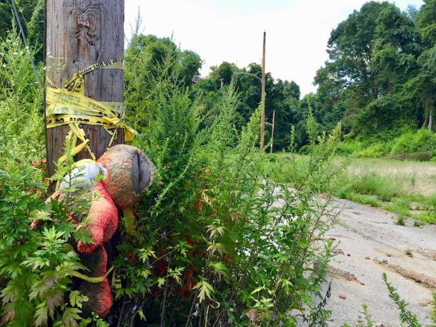stuffed animal hung from its neck by caution tape on telephone pole, Clairton, PA