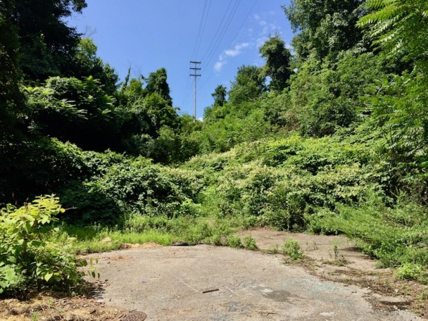 former cul-de-sac surrounded by overgrowth, Clairton, PA