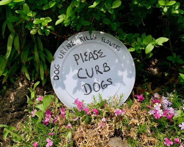 """plate with message """"Dog urine kills flowers. Please curb dogs."""" in garden flowers, Pittsburgh, PA"""