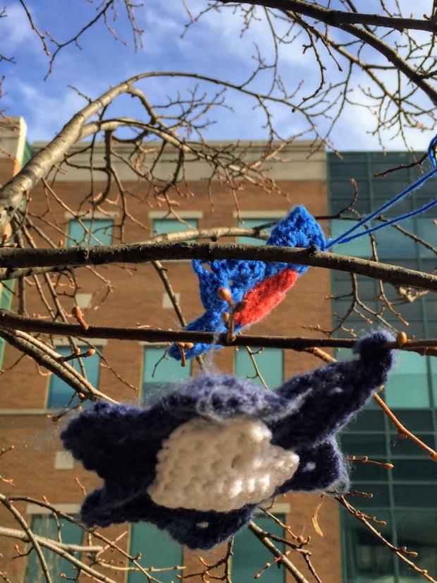 crochet Stars of David on tree limb, Pittsburgh, PA