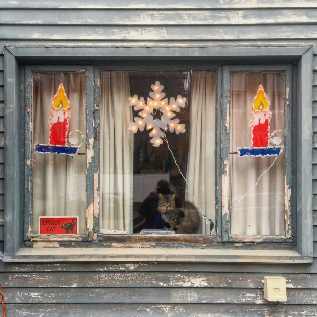 cat sitting in window decorated for Christmas, Pittsburgh, PA