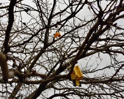 yellow toy trucks hanging by string in tree