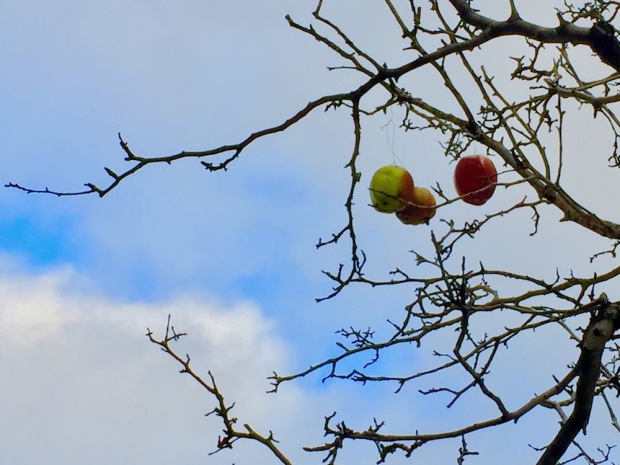 plastic apples dangling from tree limbs