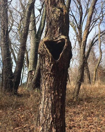 tree with heart-shaped hole
