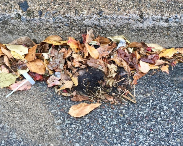 lost hair in pile of fallen leaves against curb