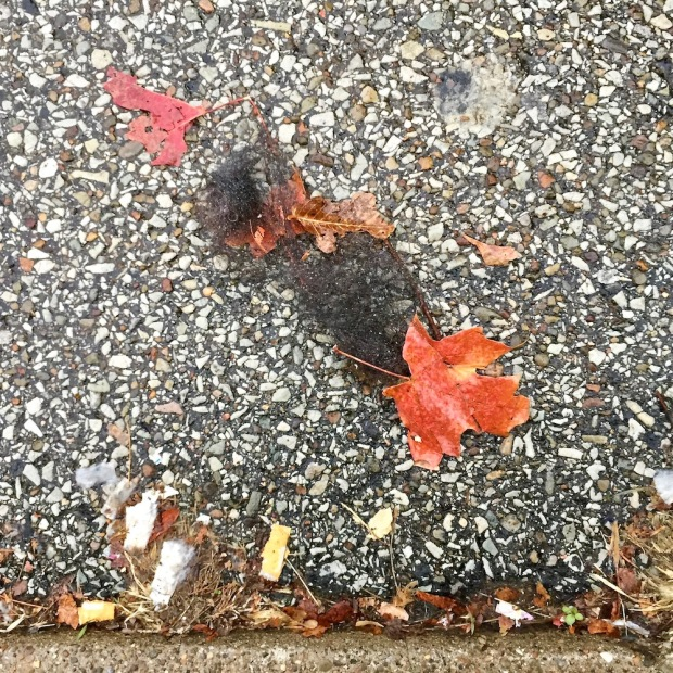 bundle of hair lying on wet pavement with fallen leaves