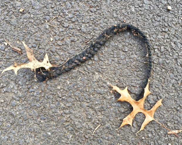 braided ponytail hair lying on street surface
