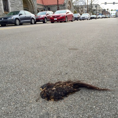mass of hair lying in street