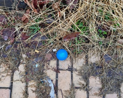 blue toy ball left on curb of brick street