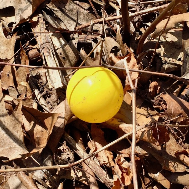yellow ball left in dried leaves
