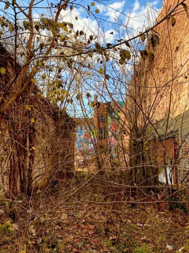 overgrown vacant lot between two brick buildings