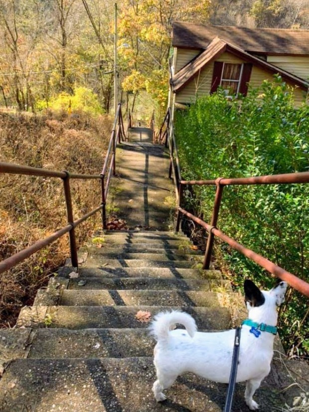 dog on leash on public steps, Pittsburgh