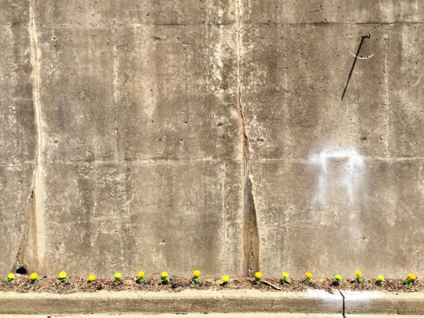 cement retaining wall with thin row of marigold flowers planted along the curb