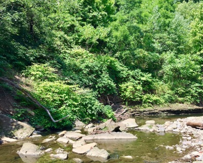 wooded hillside and creek