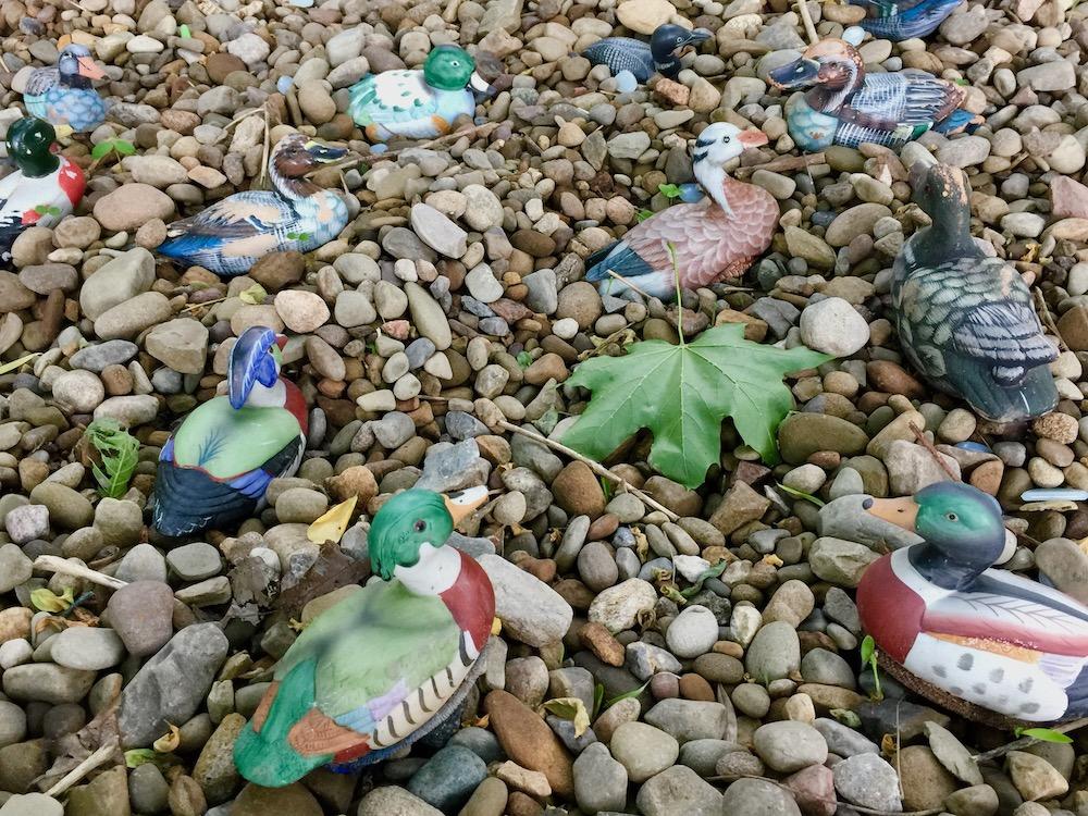 small model ducks in pool of river stones