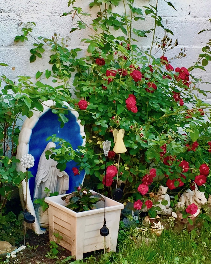 statue of Mary and rose bush in backyard garden