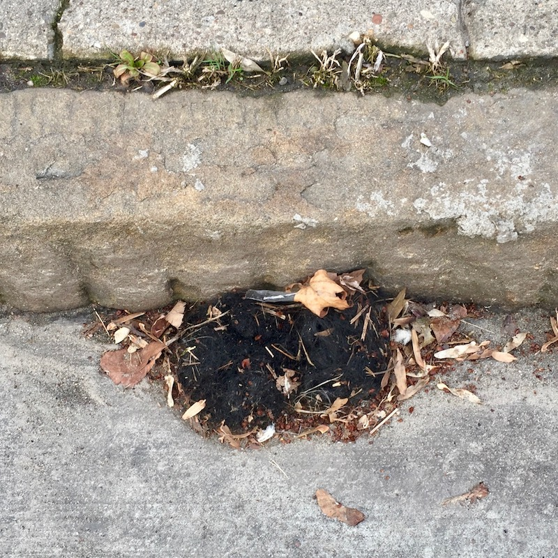 small tuft of false hair on road surface