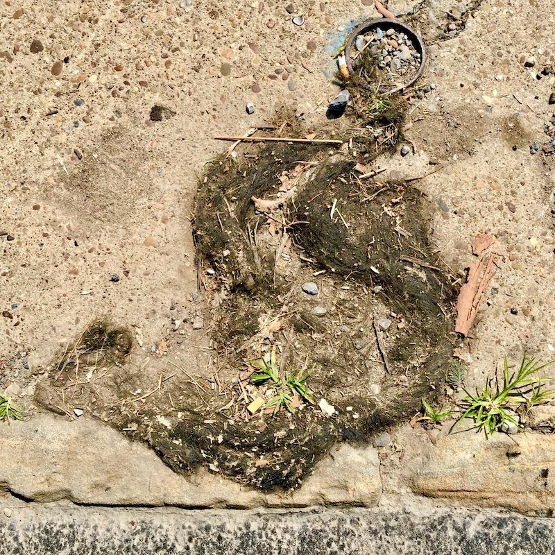 mass of hair on muddy sidewalk